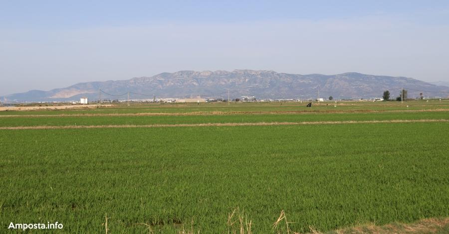 L'augment de les importacions d'arròs de Mercosur i el nou acord lliure d'aranzels posa en alerta als arrossaires catalans | Amposta.info