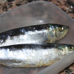 Col sofregida i sardina de casco