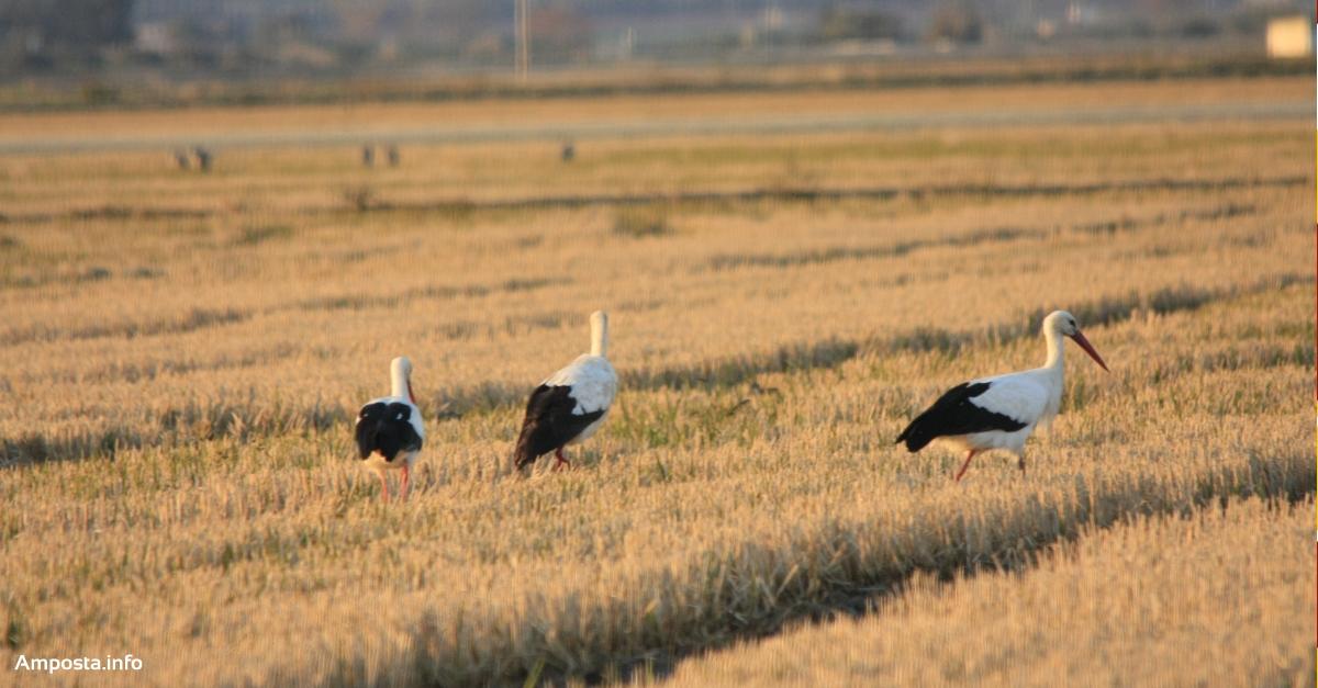 Com s'orienten els ocells?