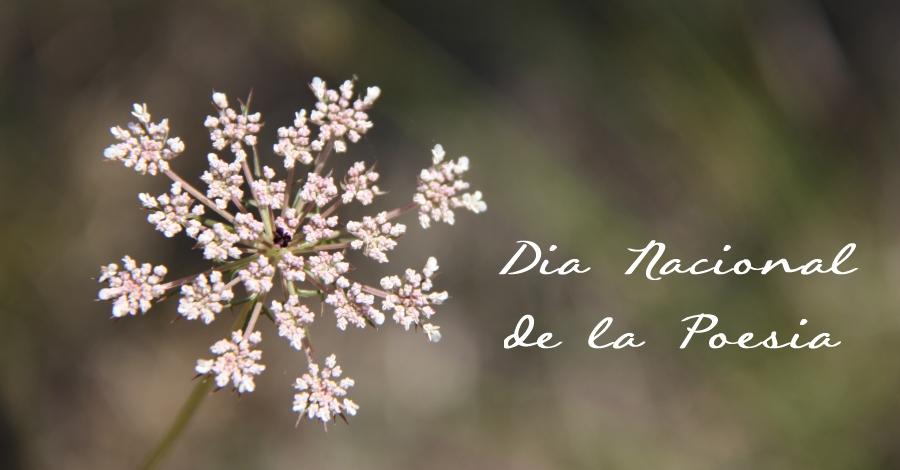 Dia nacional de la poesia amb el recital Transversal: poemes i cançons
