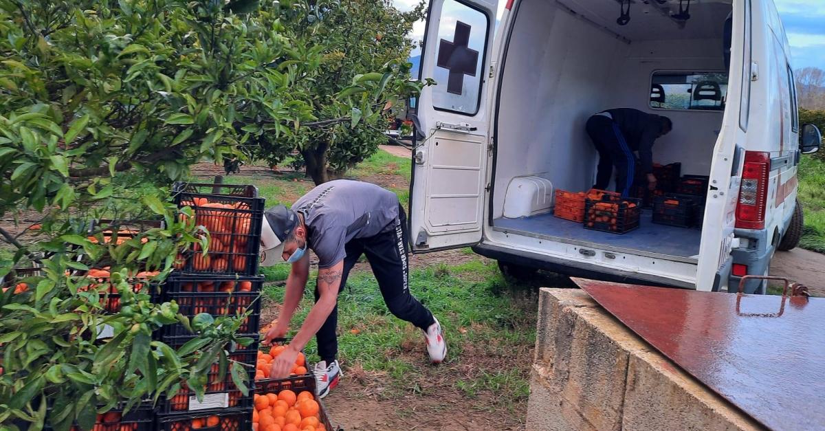 Donació de mandarines a Creu Roja Amposta