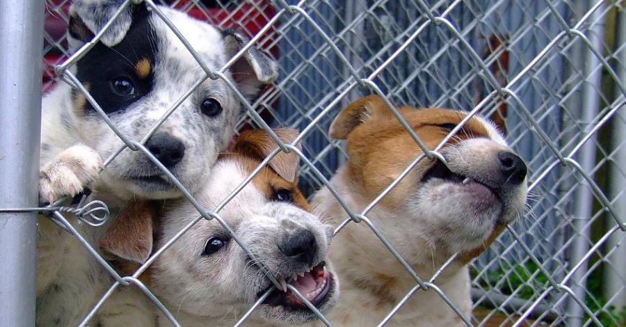 L'associació Engrescats Terres de l'Ebre assumeix el servei de recollida d'animals de la Ràpita
