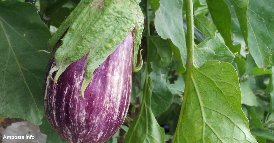 L'Escola Agrària d'Amposta organitza el curs «Obtenció tradicional de llavors hortícoles» | Amposta.info