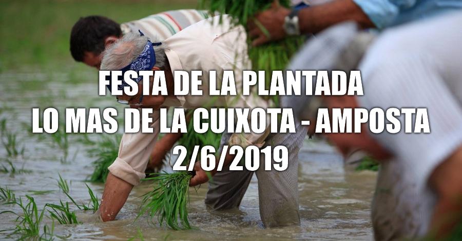Festa de la Plantada de l'arròs
