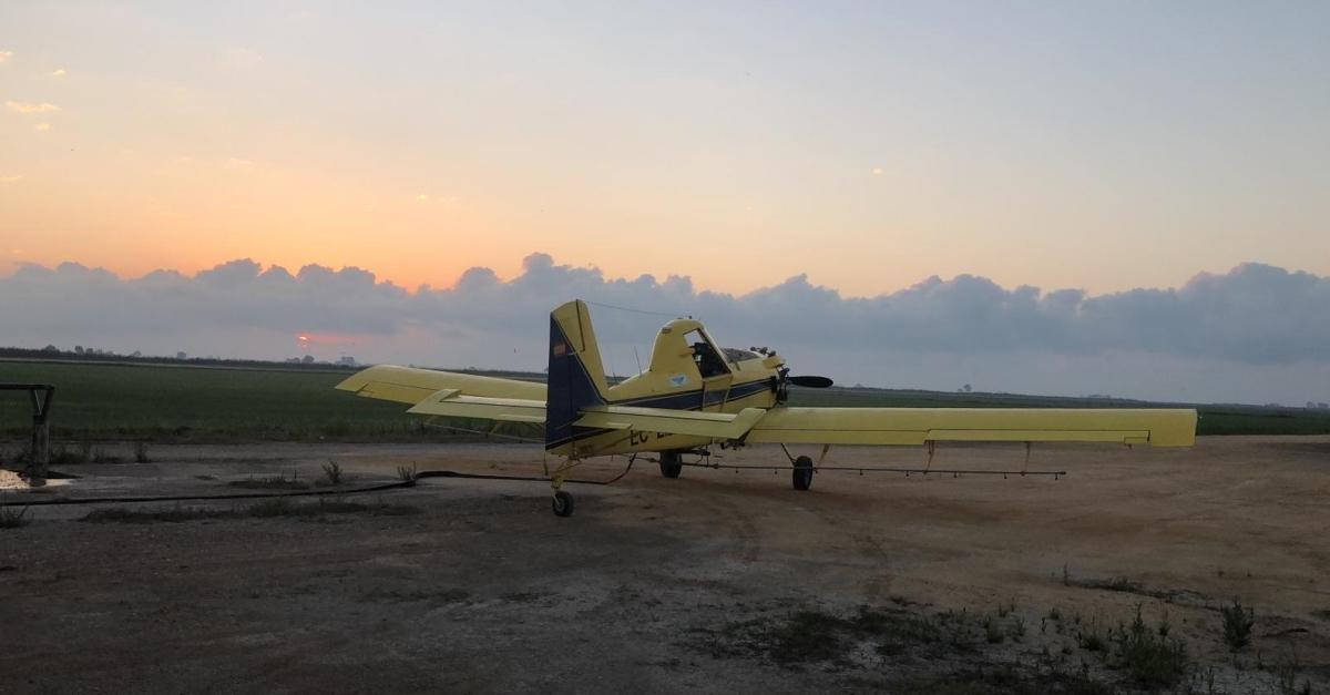 Comencen els tractaments en contra dels mosquits dels arrossars pròxims als nuclis habitats del delta de l'Ebre