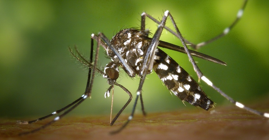 El Govern destinarà més de 670.000 euros a la lluita contra la mosca negra i el mosquit tigre
