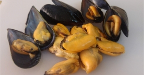 Montsià: Productes de la mar Km 0