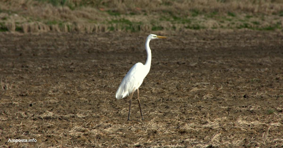 El cens d'aus aquàtiques hivernals del Parc Natural del Delta de l'Ebre registra la xifra més baixa dels últims anys | Amposta.info