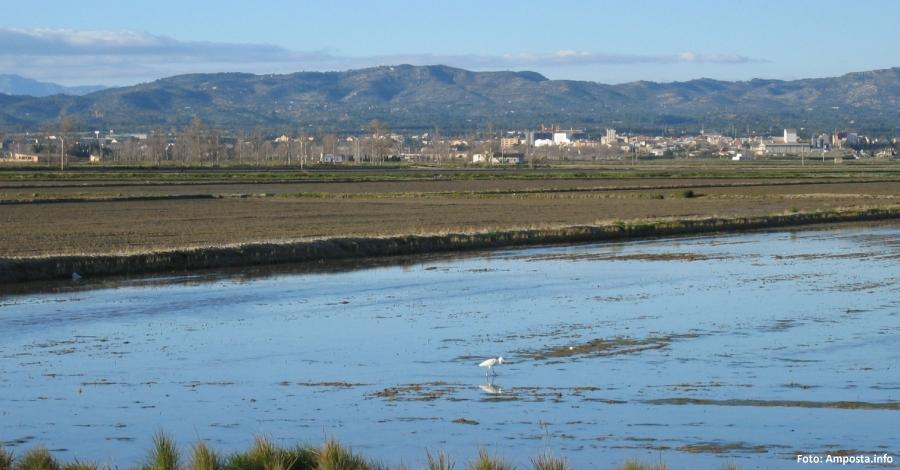 El Ple municipal aprova un front comú per fomentar la conservació del Delta de l'Ebre