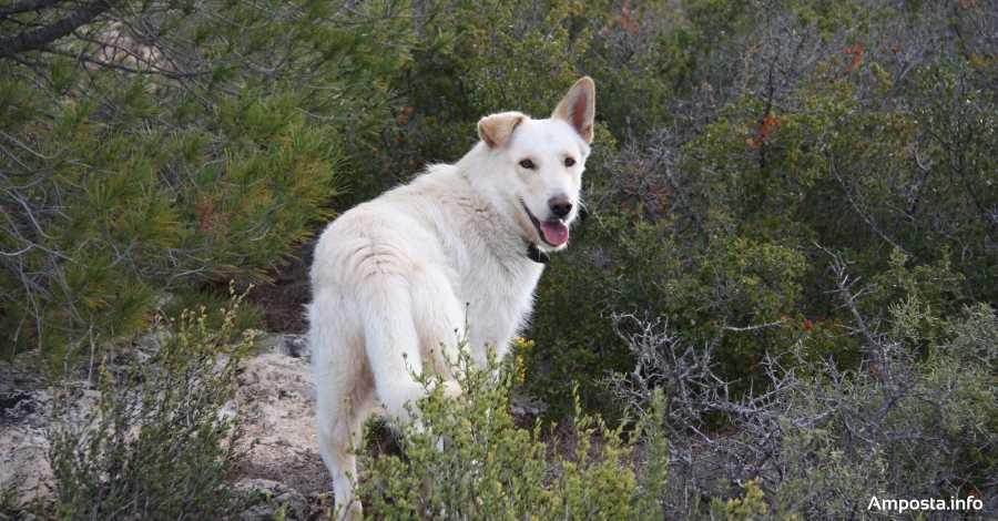 Inscripció dels animals domèstics al registre municipal | Amposta.info