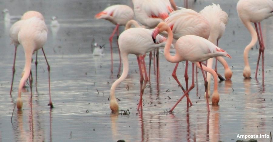 El Parc Natural del Delta de l'Ebre organitza activitats per celebrar el Dia Mundial de les Zones Humides