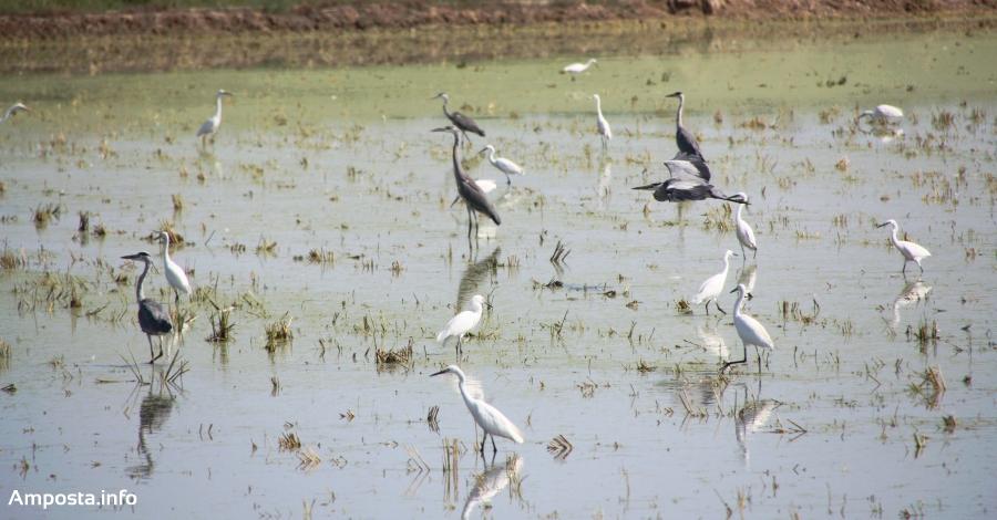 Els aficionats als ocells tenen una cita al Delta Birding Festival | Amposta.info