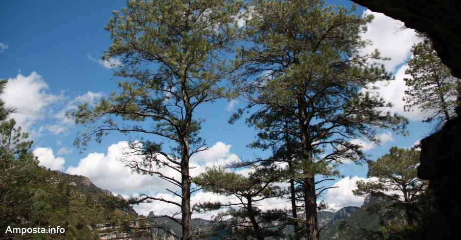 L'empresa ampostina Estellé Parquet llança el projecte «Plantem Junts» per reforestar els boscos