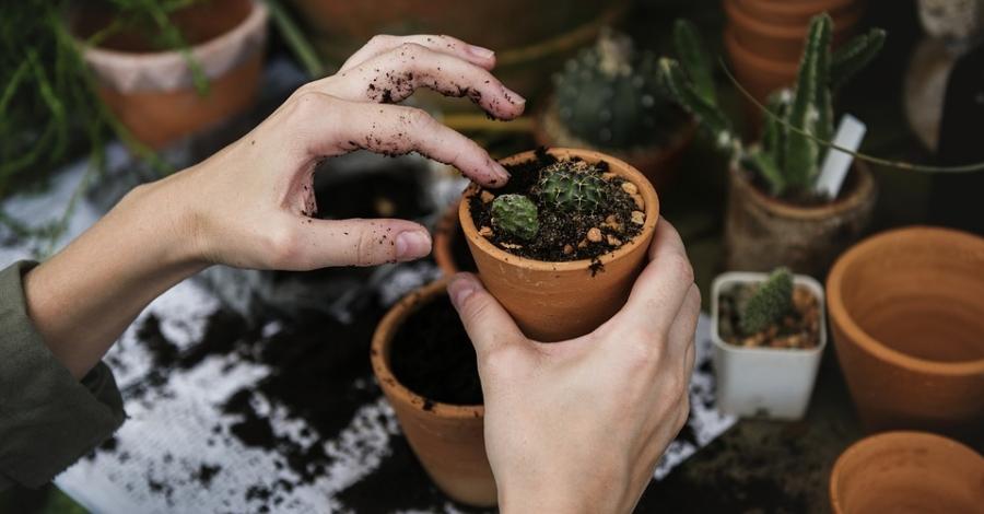 Taller de jardineria «Plantem desitjos» amb motiu de La Marató, a càrrec de Gemma Tafalla