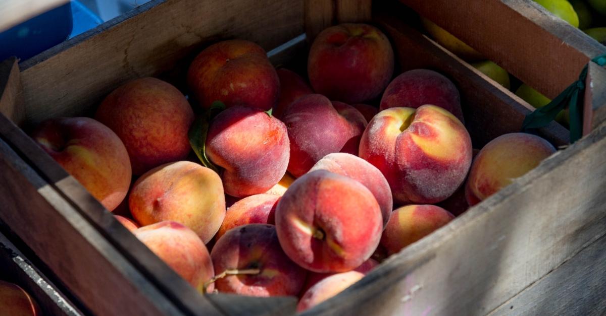 Les Terres de l'Ebre es preparen per a una campanya de recollida de fruita segura | Amposta.info