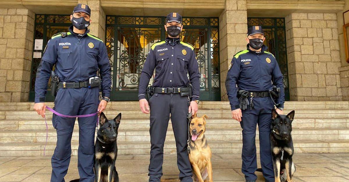 La unitat canina de la Policia Local d'Amposta, operativa de nou | Amposta.info